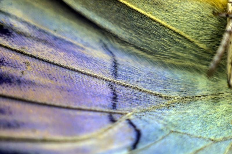 Foto macra de un ala de la mariposa imagen de archivo