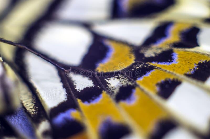 Foto macra de un ala de la mariposa fotografía de archivo libre de regalías