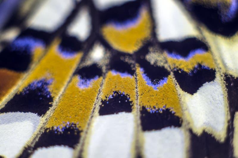 Foto macra de un ala de la mariposa fotos de archivo libres de regalías
