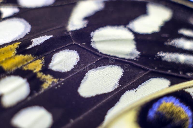 Foto macra de un ala de la mariposa imágenes de archivo libres de regalías