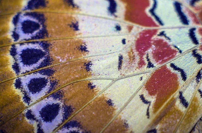 Foto macra de un ala de la mariposa fotografía de archivo
