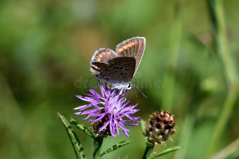 Foto macra de un marrón y de una mariposa anaranjada foto de archivo libre de regalías