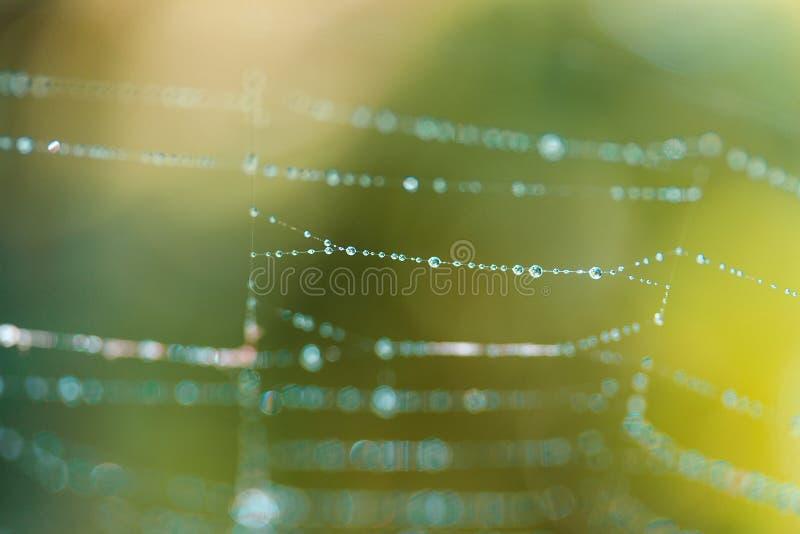 Foto macra del descenso del agua en el web en fondo natural del verde amarillo imagenes de archivo