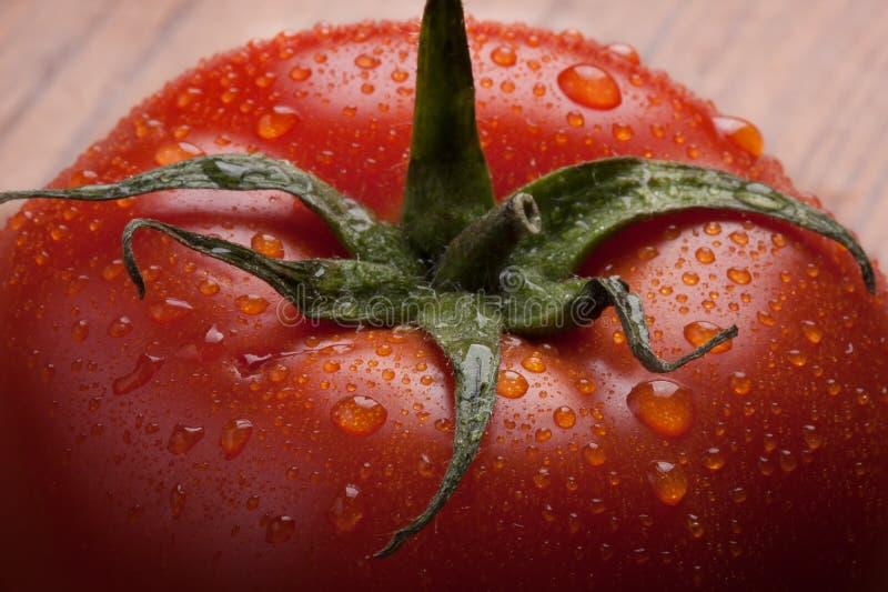 Foto macra del tomate con las gotitas de agua en la planta fotos de archivo libres de regalías