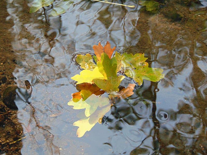 A foto macro com uma textura decorativa do fundo dos galhos do carvalho com amarelo sae na claro da água do rio da floresta fotos de stock