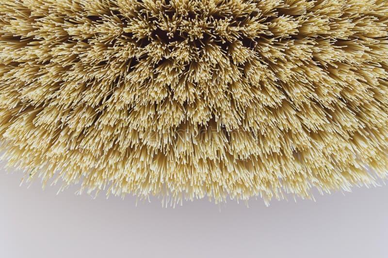 Foto macro da escova orgânica dos termas para a massagem seca Escova do cacto massagem das Anti-celulites Conceito da beleza dos  foto de stock royalty free