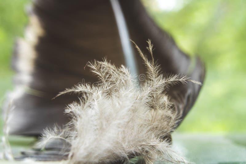 Foto macro da pena e do fluff de pássaro imagem de stock royalty free