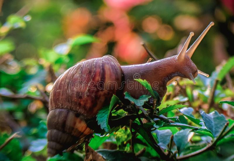 Foto macro da vida animal em meu jardim imagens de stock royalty free