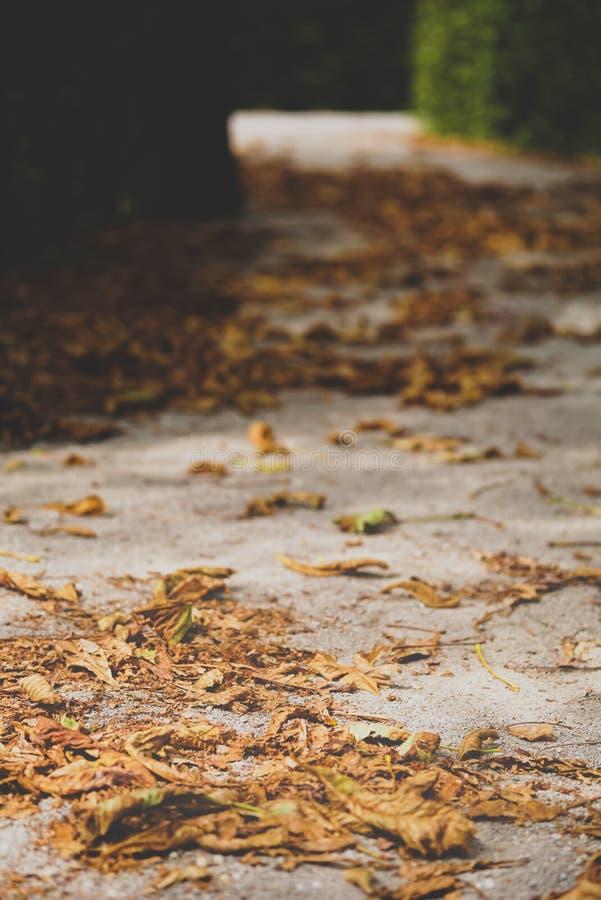 Foto macro das folhas do amarelo do outono de ensolarado fotos de stock
