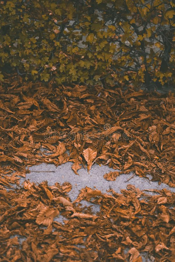 Foto macro das folhas do amarelo do outono de ensolarado imagem de stock