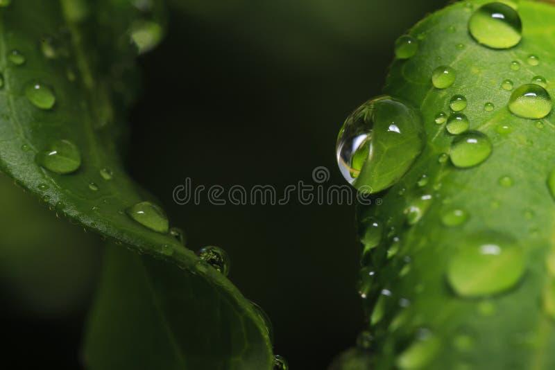 Foto macro de gotas da água na folha imagem de stock