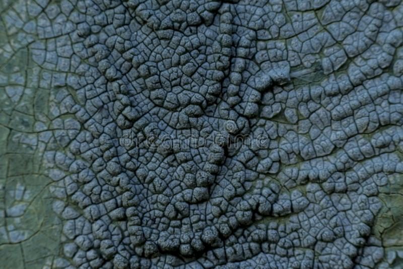 Foto macro Textura de uma pintura azul velha foto de stock royalty free