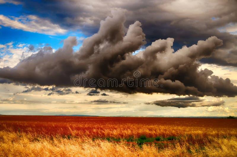 Foto meteorológica - nube de cúmulo sobre campo de la agricultura imágenes de archivo libres de regalías