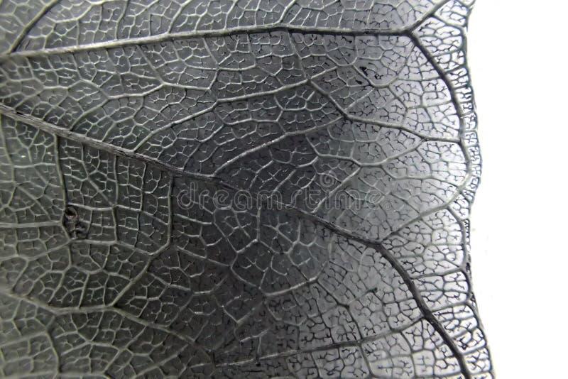 foto micro de la textura de la hoja imagen de archivo libre de regalías