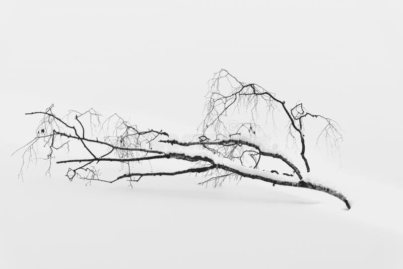 Foto minima in bianco e nero del ramo di albero rotto nella neve fotografia stock