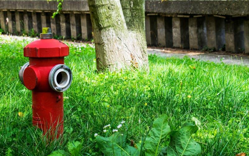 Foto mit einem Hydranten, im grünen Gras, in einem Baumstamm und in einem Steinzaun, an einem warmen Sommertag, irgendwo in Europ lizenzfreie stockfotografie
