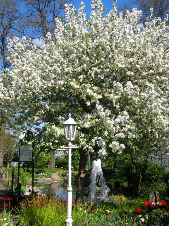 Foto Mit Schönen Bäumen Des Blühenden Gartens Des Frühlinges Der ...