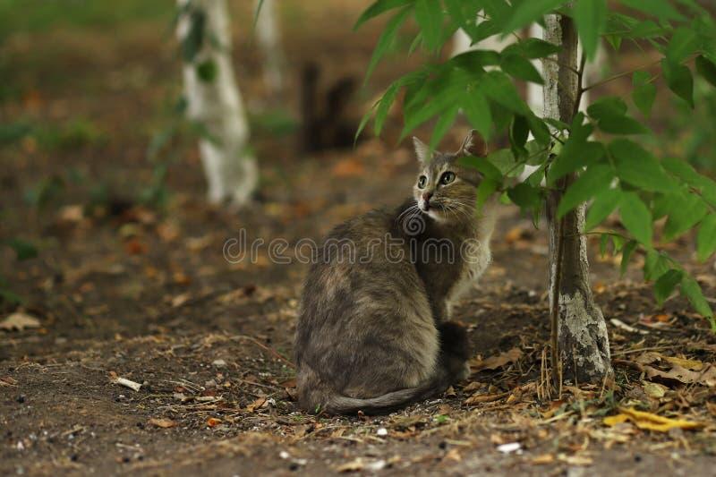 2018 foto nova, gato disperso cinzento adorável fotografia de stock