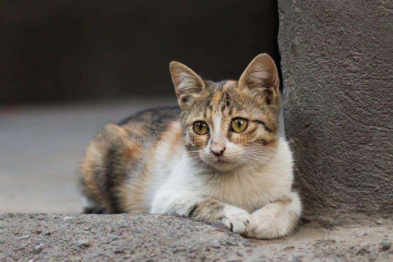 2018 foto nova, gato disperso colorido adorável com cara triste fotos de stock