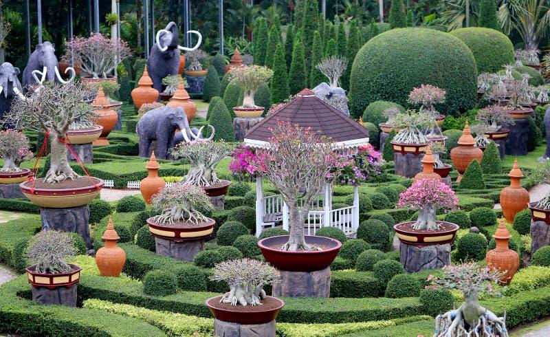 Foto ongebruikelijke exotische tuin met kleine bonsai royalty-vrije stock foto