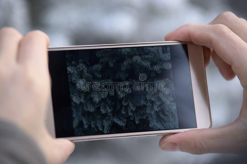 Foto op telefoon Pluizige groene takjes Rijp royalty-vrije stock afbeelding