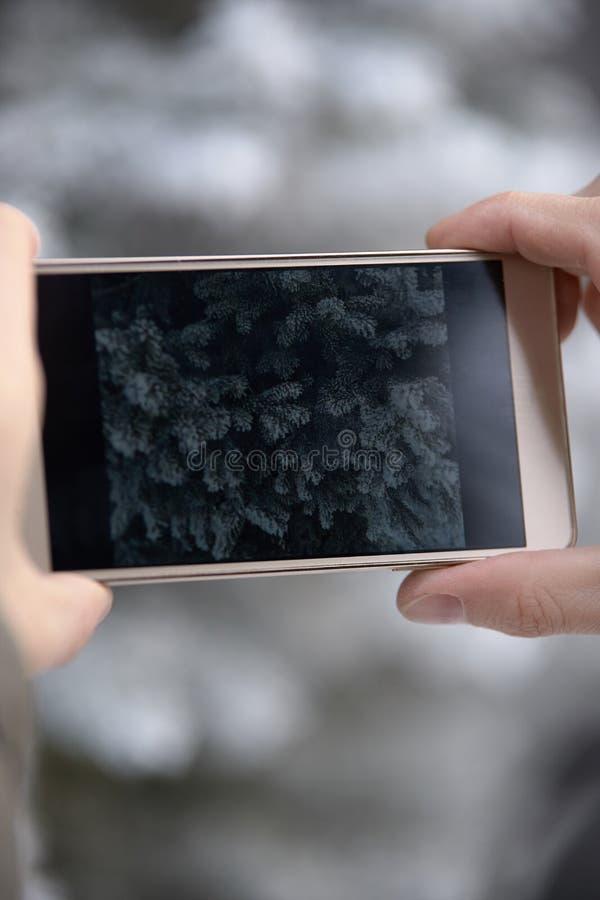 Foto op telefoon Rijp Pluizige groene takjes royalty-vrije stock foto