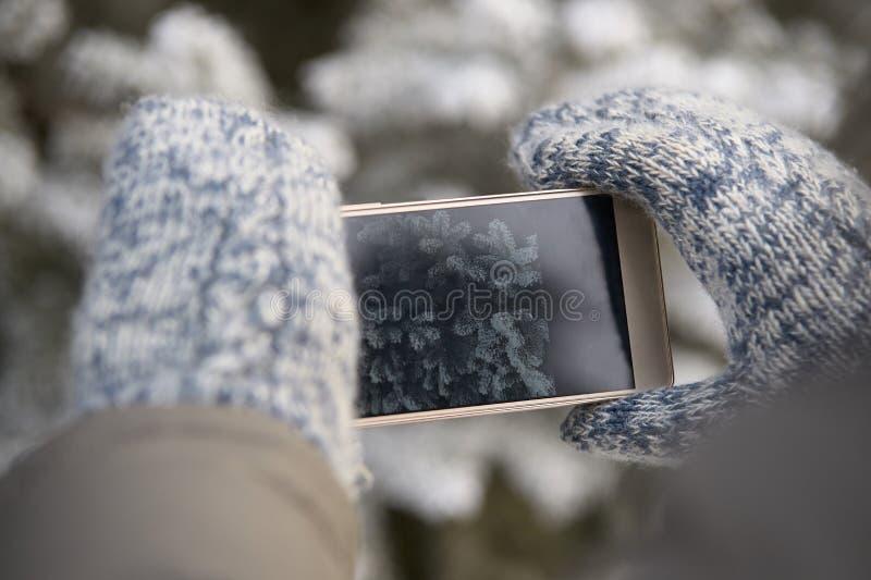 Foto op telefoon Tak van sparren Warme vuisthandschoenen wapens stock foto