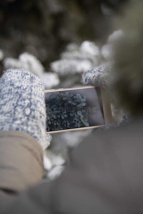 Foto op telefoon Tak van sparren Warme vuisthandschoenen wapens stock afbeeldingen