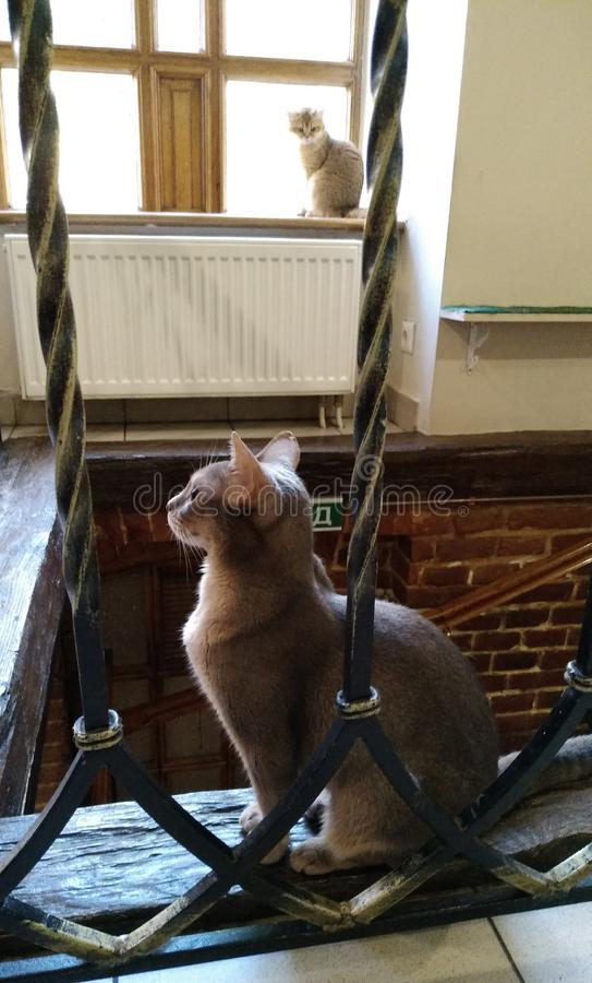 Foto orgulhoso do gato imagens de stock royalty free