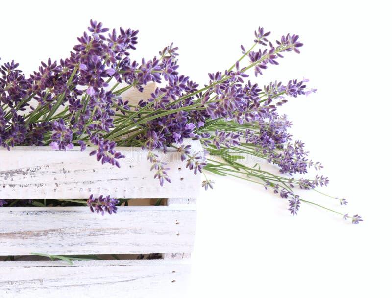 Foto på formaterade lager Dekorativ likhetstid Färska blommor av lavender i en vit trälåda på en vit arkivbild