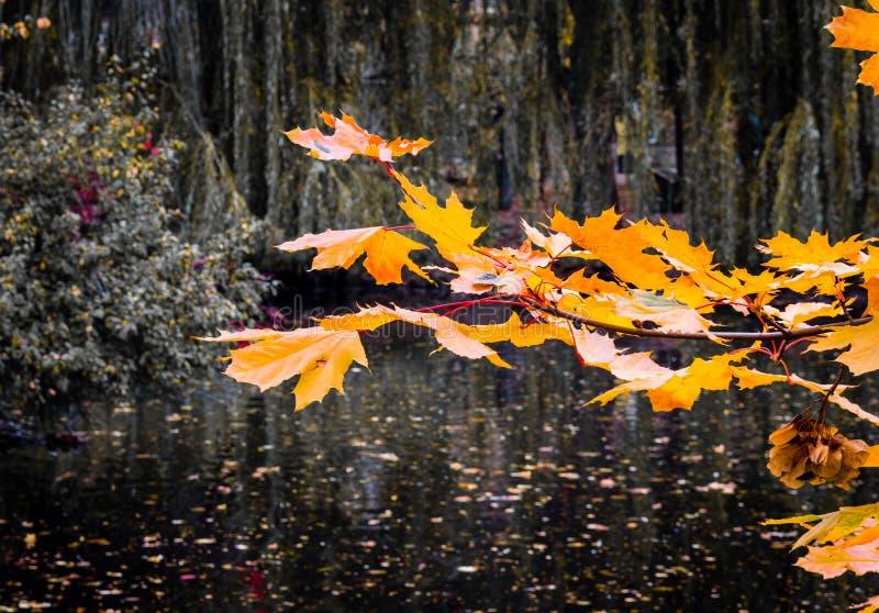 Foto på yttersida En gren av blad Sjön arkivfoto