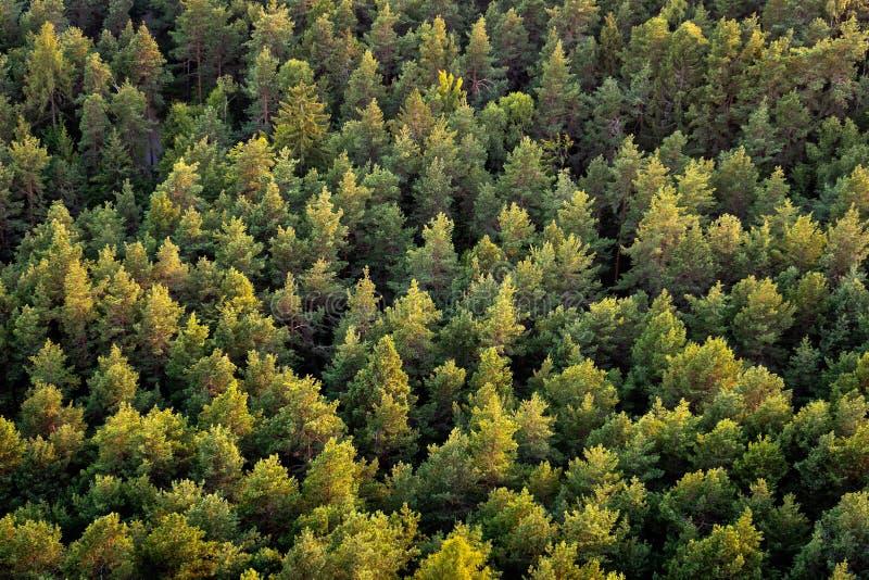Foto panorâmico bonita sobre as partes superiores da opinião aérea da floresta do pinho fotografia de stock royalty free