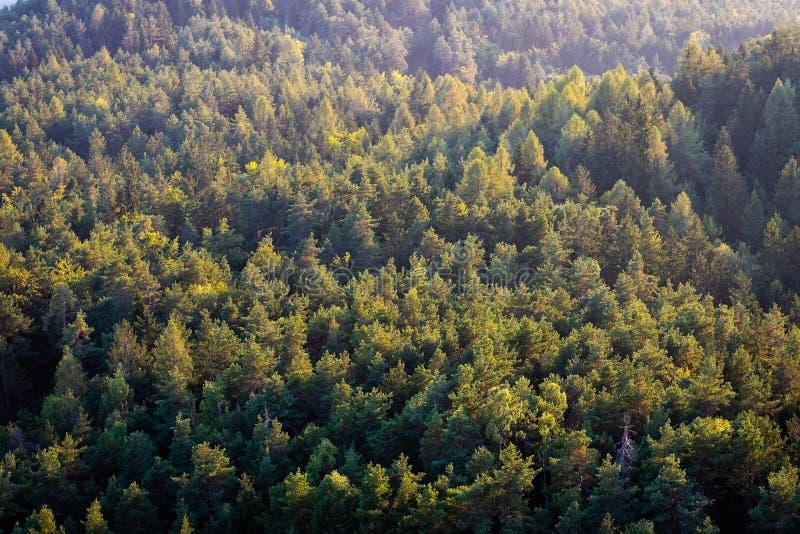 Foto panorâmico bonita sobre as partes superiores da opinião aérea da floresta do pinho foto de stock royalty free