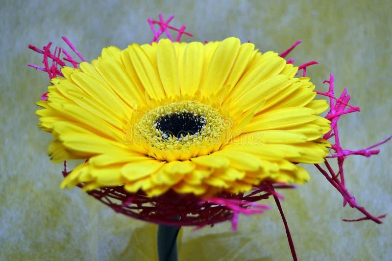 A foto próxima da flor do amarelo do gerber imagens de stock