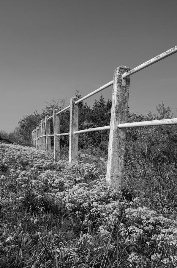 Foto preto e branco das flores e da cerca fotografia de stock