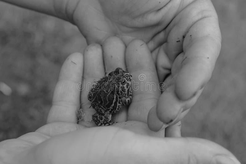 Foto preto e branco de um sapo do bebê na mão de uma criança imagens de stock royalty free
