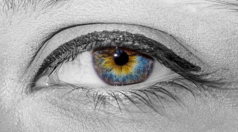 Foto preto e branco do olho multicolorido colorido bonito da mulher com close-up pintado das pestanas fotografia de stock