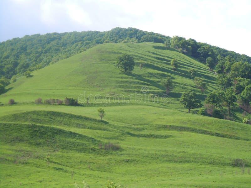 Foto que compite para el xp Ondas en la colina verde ilustración del vector