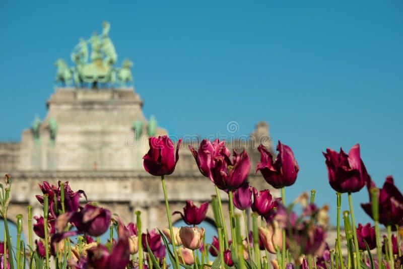 Foto ravvicinata di fiori in fiore e dell'Arco trionfale a Bruxelles fotografia stock