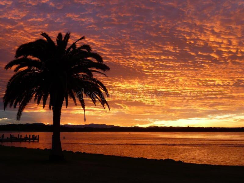 Foto-realistic computererzeugtes Bild eines schönen Sonnenuntergangs, mit Palmen im Vordergrund stockfotografie
