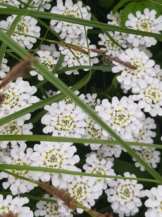Foto's van ongebruikelijke schoonheid, die witte mooie bloemen ving stock foto