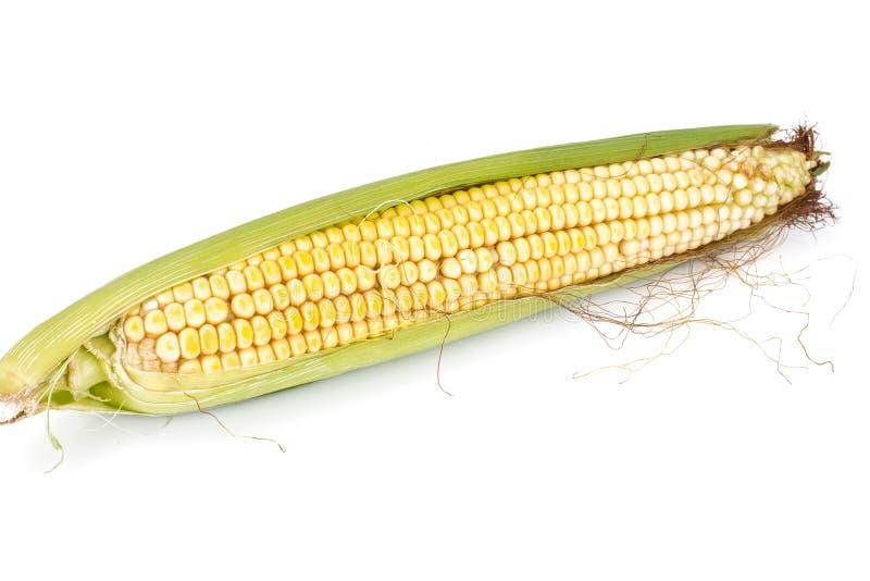 Foto sabrosa dulce del estudio de la mazorca de maíz aislada en blanco imágenes de archivo libres de regalías