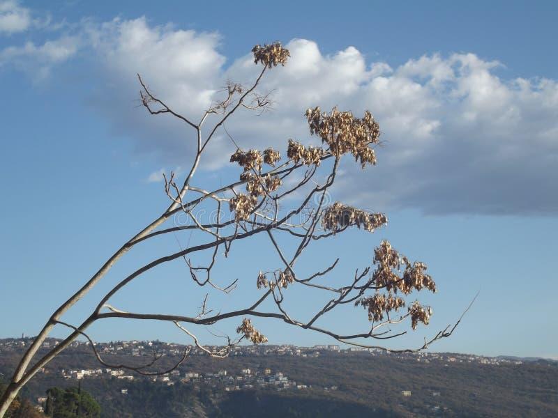 Foto soleada de Lovley con una nube y una rama de árbol imagen de archivo libre de regalías