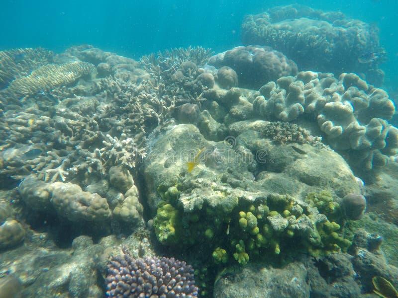 Foto subacquea di corallo e di un pesce giallo e dell'argento fotografie stock