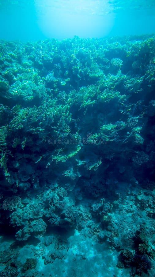 Foto subacu?tica panor?mica del arrecife de coral hermoso y de pescados tropicales que nadan fotos de archivo