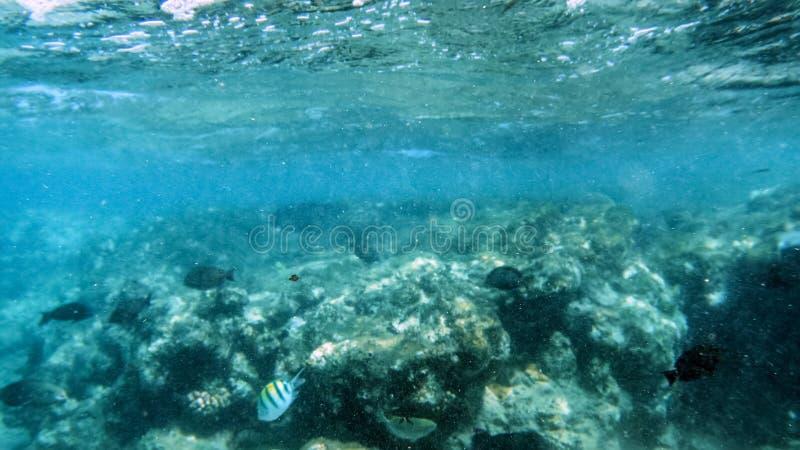 Foto subaquática bonita dos lotes dos peixes corais coloridos que nadam em torno do corel inoperante no Mar Vermelho foto de stock royalty free