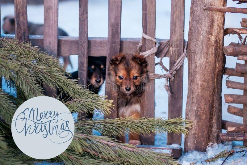 Foto sveglia di inverno del cucciolo, fondo dei piccoli cani fotografia stock