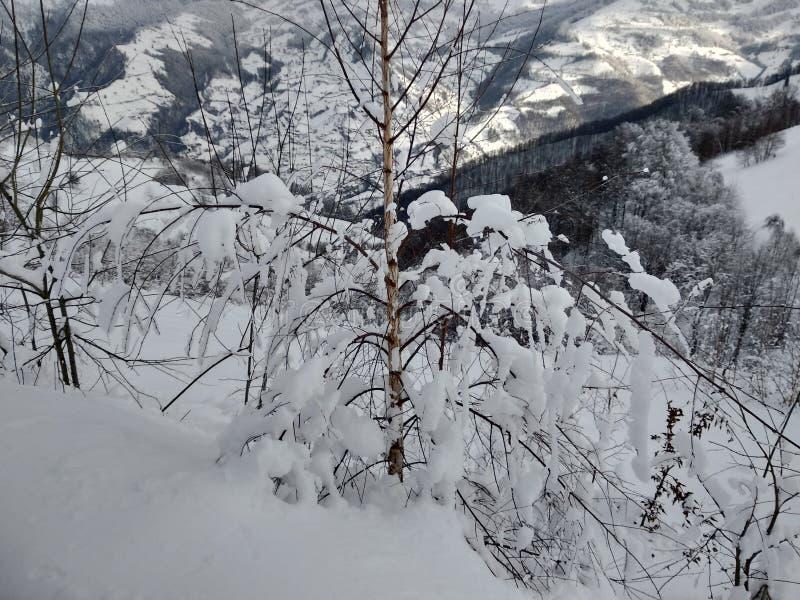 Beautiful winter landscapes with mountains and snow-laden trees in the village of Parva, Romania, Transylvania. Foto tomada en Enero 2019, en pueblo de parva royalty free stock image