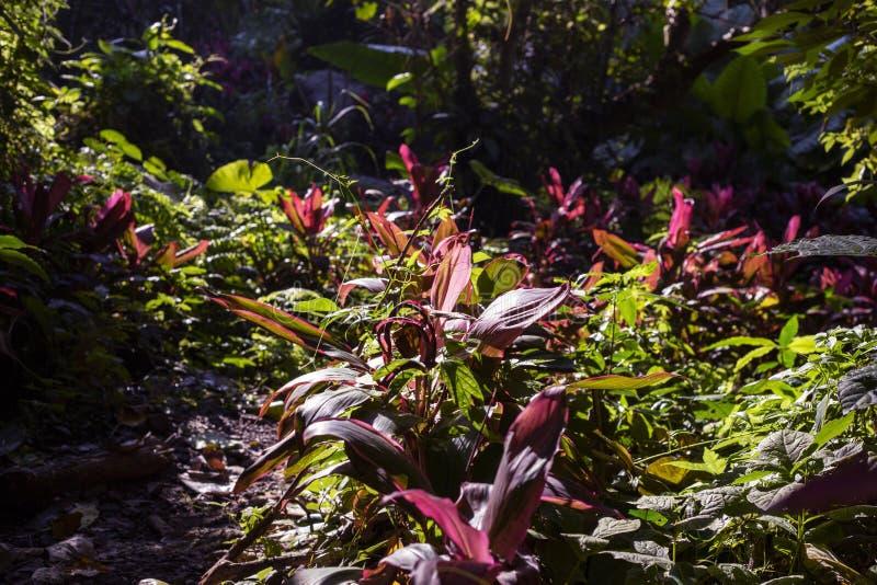 Foto tropical ensolarada da paisagem do jardim Opinião verde e vermelha das folhas Teste padrão natural em plantas exóticas fotografia de stock royalty free