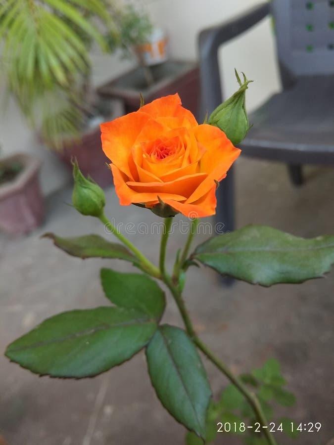 Foto van de bloem stock afbeelding